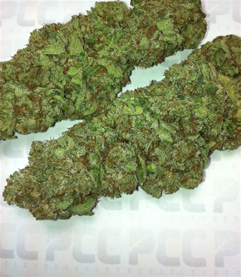 +cush berry picture 2