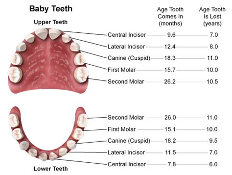 baby teeth losing picture 1