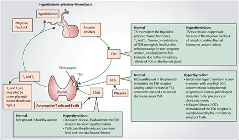 affects of hyperactive thyroid in pregnancy picture 13