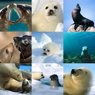 , seal pack hd bp picture 1