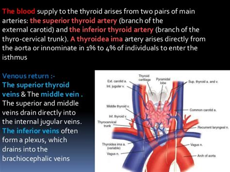 cause increased blood flow to thyroid picture 10