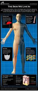 how do the scientists weigh human skin picture 3