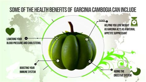 garcinia cambogia health benefits picture 5