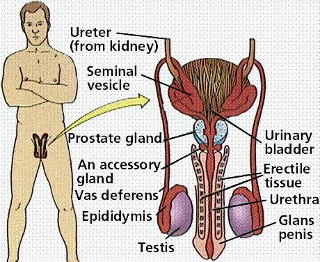 testosterone levels zinc picture 14