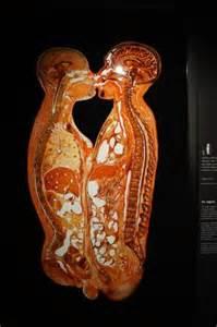 body picture 3
