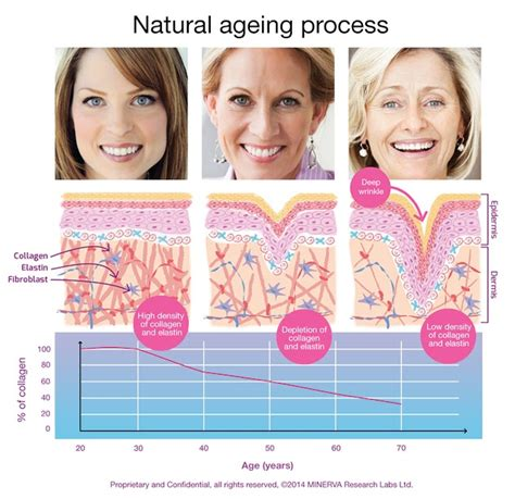 the effects of ageing on collagen and flexibility picture 1