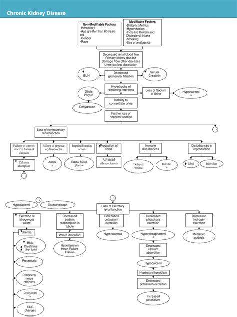 diagram uti+pathophysiology picture 19