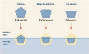a natural opioid receptor blocker picture 7