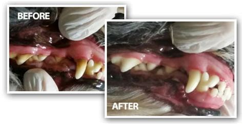 alternative dog teeth cleaning picture 3