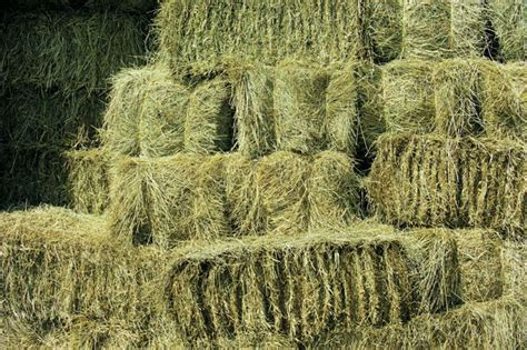 alfalfa hay for sale picture 2