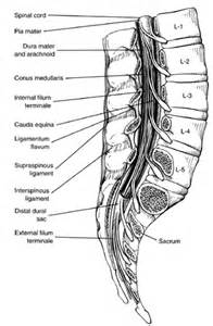 Infected epidytimis picture 13