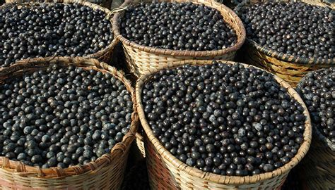 acai berry for animals picture 11