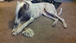 canine spotted skin picture 3
