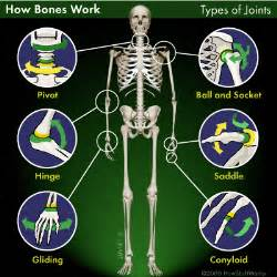 bones and joints picture 10