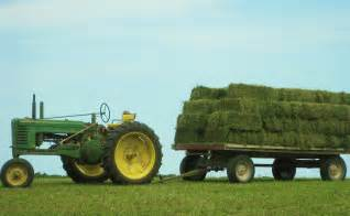 alfalfa hay for sale picture 10