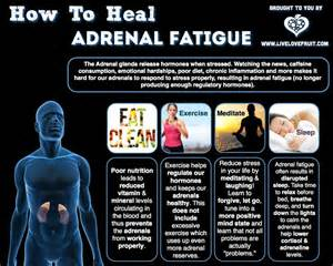 adrenal fatigue and low thyroid picture 13