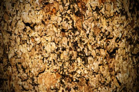 yohimbee bark and prostate health picture 3