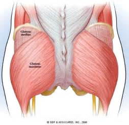 gluteus maximus syndrome picture 2
