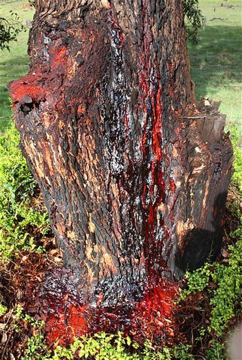 Gum bleeding high blood pressure picture 7