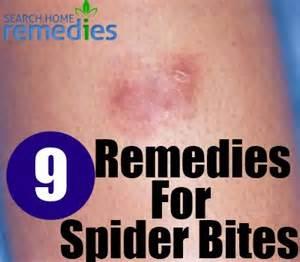 spider bite home remedy picture 9