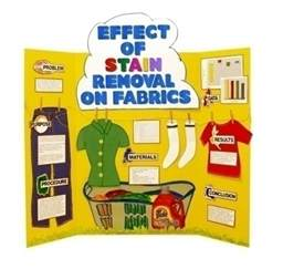 h staining science fair project picture 3