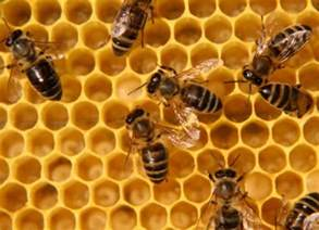 bee hives pictures picture 3