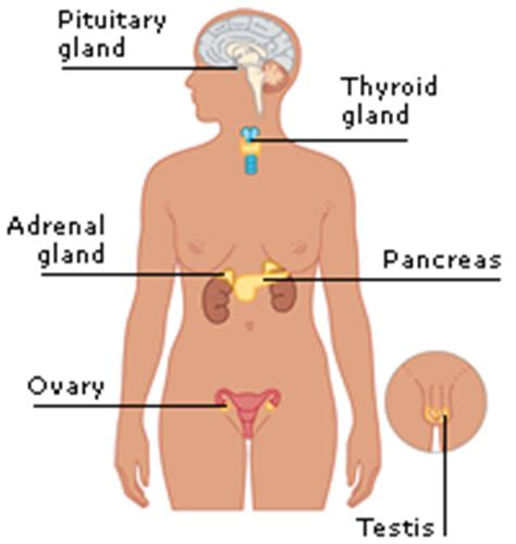 how to treat inflamed thyroid picture 6
