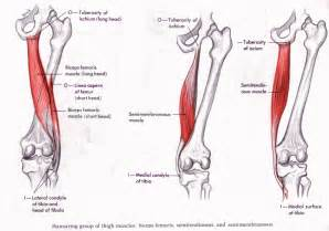 acute muscle tear picture 9