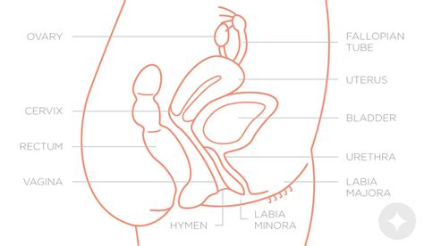 cysis of the bladder picture 6