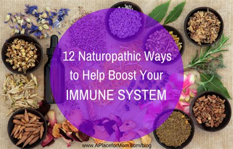 what herbal suppement help boost the immune system picture 4