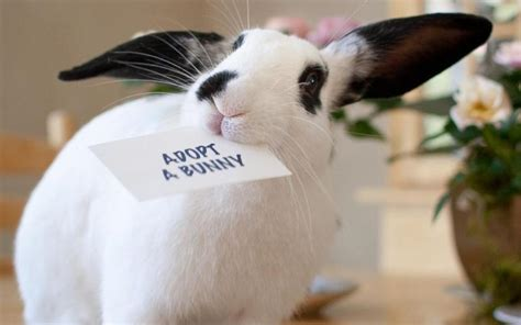 can you treat rabbits eyes with people products? picture 11