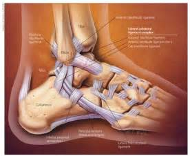 joint capsular sprain foot picture 13