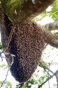 pictures of bee hives and bees picture 1