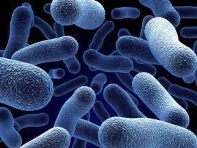 acidophilus for acne picture 5