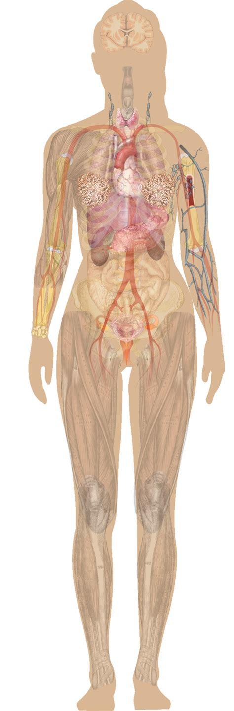 female anatomy pics picture 7