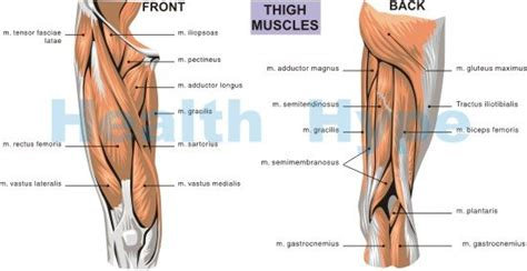 inner knee joint tendon injury picture 11