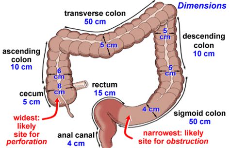 colon cleansing and penis size picture 6