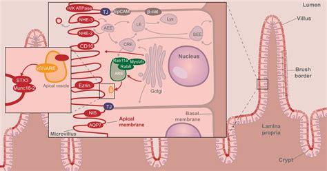 bone marrow suppression from bulimia picture 3