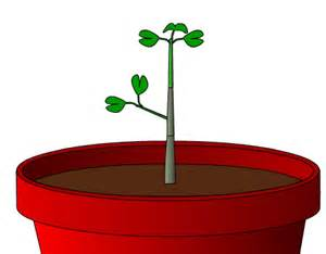 animated growth picture 1