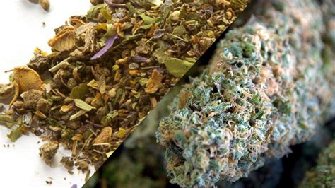 herbs that imitate marihuana picture 10