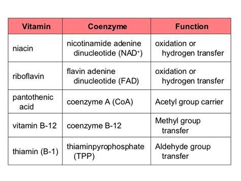 pantothenic picture 2