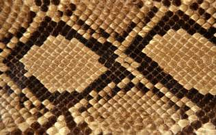 snake skin s picture 1