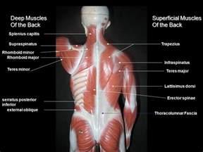 inferior oblique muscle picture 11