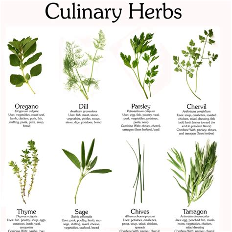 Which herbal plant is best for an picture 8