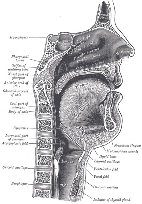 thyroid and choking picture 14