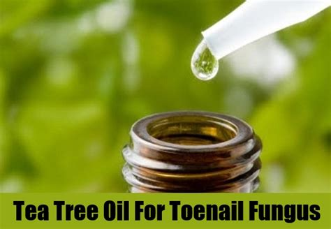tea tree oil treatment for nail fungus picture 6