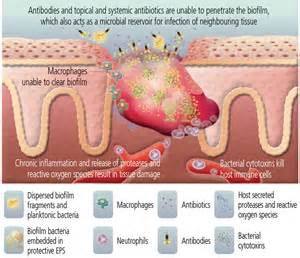 stages of the bacterial infection picture 6