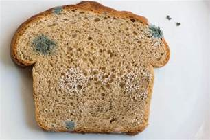 fungus on bread picture 1