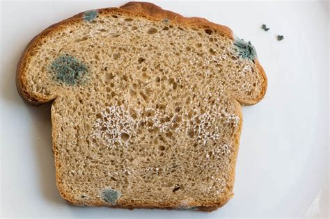 fungus on bread picture 3
