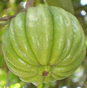 where can you buy pure garcinia cambogia in picture 10